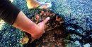 কুলাউড়ায় ঠিকাদার কোকিলের দুর্নীতির তদন্ত গোপনে করে গেলেন অতিরিক্ত প্রধান প্রকৌশলী